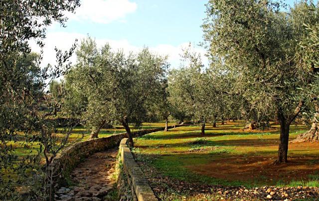 """Obwohl es schon Oktober war, stach die Sonne unerbittlich vom Himmel. brandy74, """"Olivenhain"""", Some rights reserved, Quelle: www.piqs.de"""