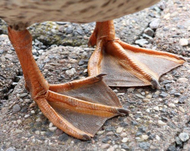"""Wahrscheinlich hatte Max kalte Füße bekommen. fotomomente_naujoks, """"Maniküre"""", Some rights reserved, Quelle: www.piqs.de"""